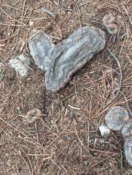 un tronco de árbol sesgado con forma de corazón